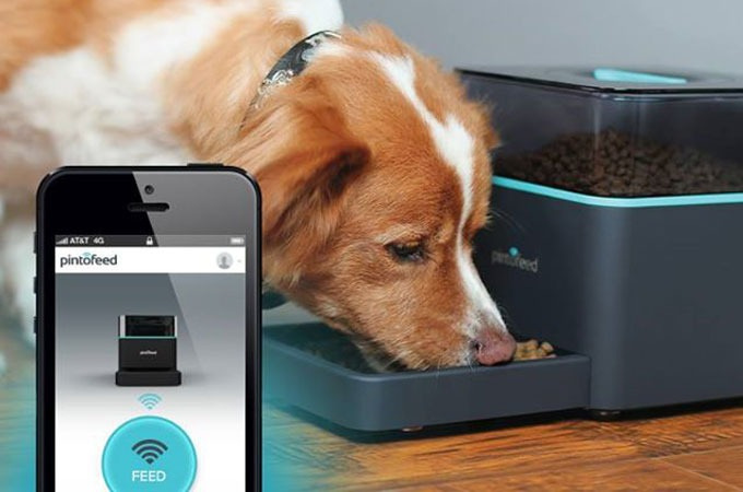Medium_pintofeed-automatic-pet-feeder-1