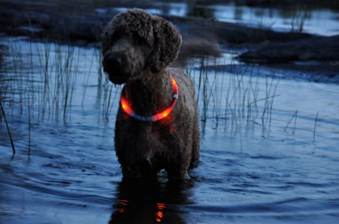 Glow Dog Collar Rechargeable