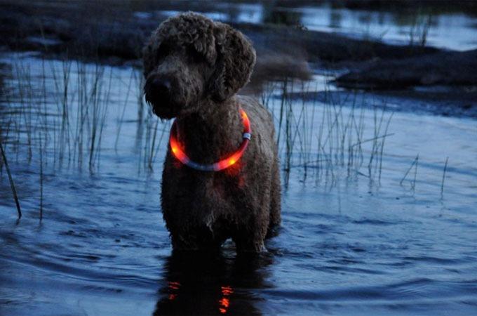 Led Dog Collar Petsmart